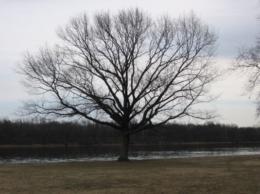A beatiful old tree along the Delaware River