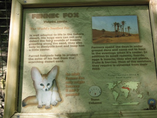 Fennec Fox Description