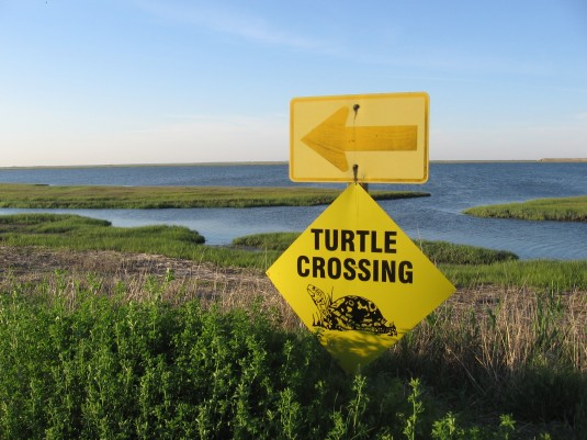 Will I see a turtle?