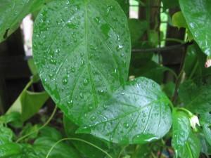 a rainy day in my garden