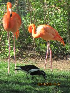 Two Caribbean Pink Flamingos and bird.